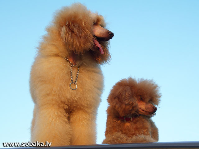 Зара и Жора. 