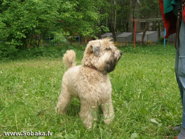 будущий чемпион. 