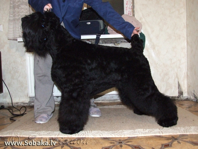 Подкотовка к выставке. 