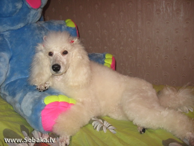 Новация из «Дома ТАЮР». 