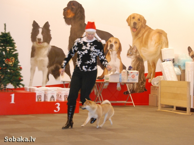 Specializeta izstade 20.12.2014. 