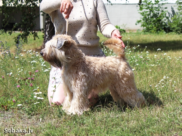 Юный Чемпион Беларуси. 
