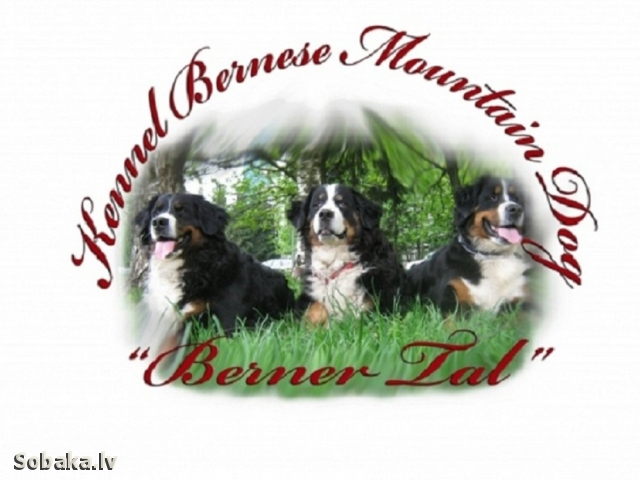 Dog kennel BERNER TAL