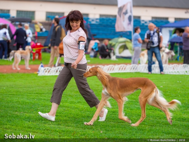 Чемпионат борзых-2016. 