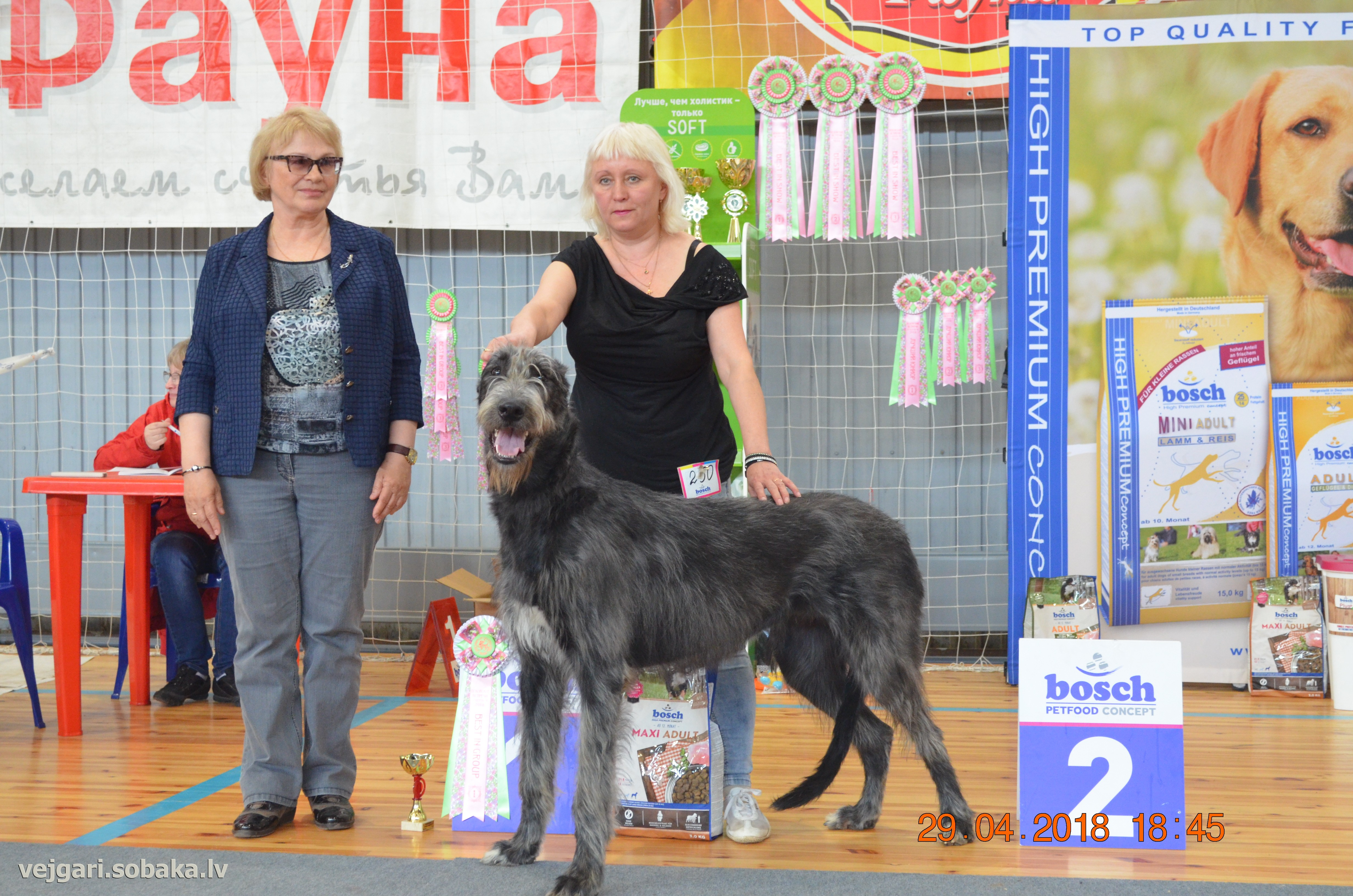 Irish Wolfhound   Фото 108850