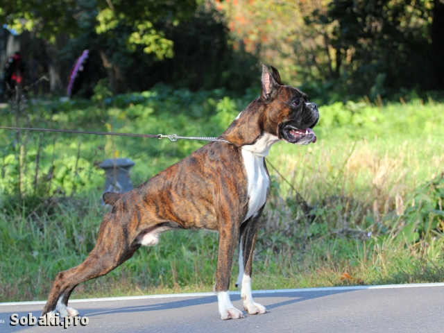 33. 