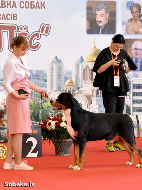 GREAT SWISS MOUNTAIN DOG => THE DOG  