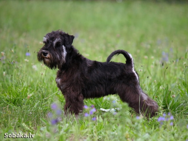 Счастье рядом. 