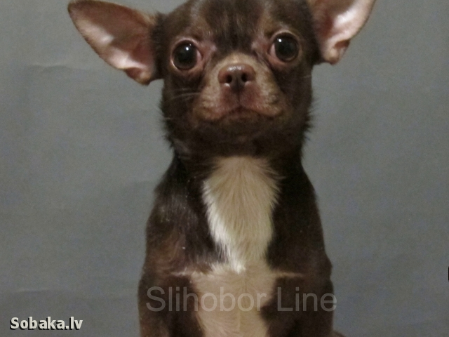 CHIHUAHUA => PHOTOS  