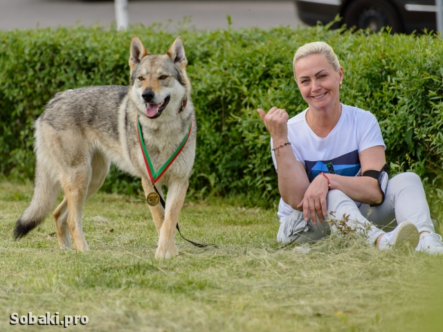 CZESLOVAKIAN WOLFDOG => THE DOG  